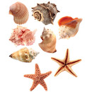 Pinboard Magnets Starfishes & Mussels Set with 8 pcs.