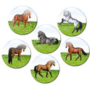 Magnetic pinboard Horses at a gallop 60x40 cm incl. 6 magnets